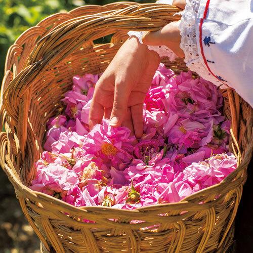 花の香りを愛でて ポジティブな影響を生活に取り入れる